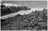 Wildflowers at Marmot Meadows, and Exit Glacier. Kenai Fjords National Park ( black and white)