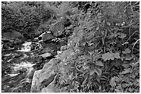 Widflowers and cascading stream. Kenai Fjords National Park ( black and white)