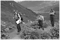 Women Park rangers on trail during a field study. Kenai Fjords National Park, Alaska, USA. (black and white)