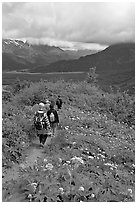 Hiking surrounded by wildflowers on Harding Icefield trail. Kenai Fjords National Park ( black and white)
