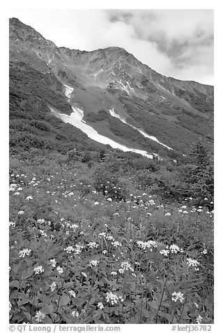 Hills and verdant alpine meadows, seen from Harding Icefield trail. Kenai Fjords National Park (black and white)