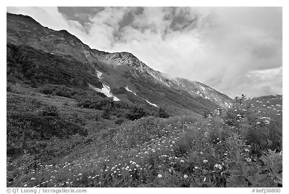 Open view of verdant alpine hills, Marmot Meadows. Kenai Fjords National Park (black and white)