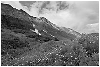 Open view of verdant alpine hills, Marmot Meadows. Kenai Fjords National Park, Alaska, USA. (black and white)