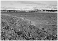Grasses and rivershore. Kobuk Valley National Park, Alaska, USA. (black and white)