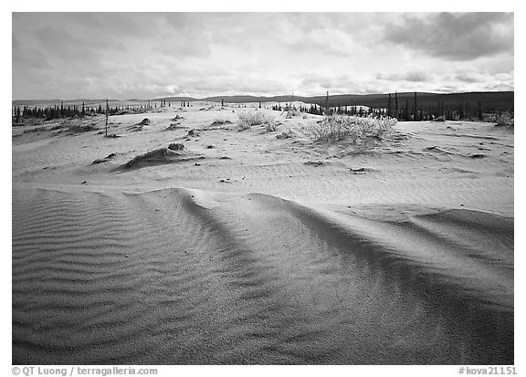 Sand ripples in Arctic dune field. Kobuk Valley National Park (black and white)