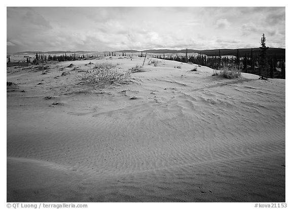 Dune field with boreal forest in the distance. Kobuk Valley National Park (black and white)