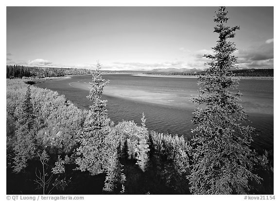 Kobuk river and sand bar seen through Spruce trees. Kobuk Valley National Park (black and white)