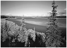 Kobuk river and sand bar seen through Spruce trees. Kobuk Valley National Park, Alaska, USA. (black and white)