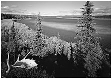 Antlers and bend of the Kobuk River, mid-morning. Kobuk Valley National Park, Alaska, USA. (black and white)