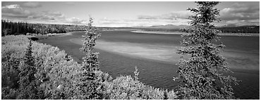 Northern river scenery seen through spruce trees. Kobuk Valley National Park (Panoramic black and white)