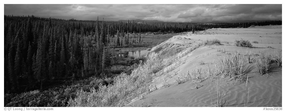 Sand dunes and boreal forest. Kobuk Valley National Park (black and white)