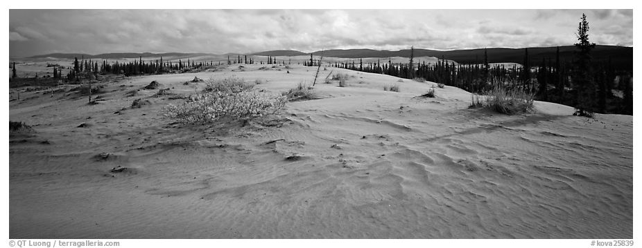 Arctic sand dune landscape. Kobuk Valley National Park (black and white)