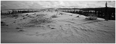 Arctic sand dune landscape. Kobuk Valley National Park (Panoramic black and white)