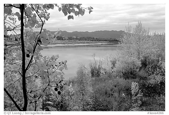 River, Warring Mountains, and fall colors at Onion Portage. Kobuk Valley National Park (black and white)