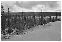 Pocket of Spruce trees in the Great Sand Dunes. Kobuk Valley National Park, Alaska, USA. (black and white)