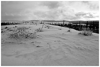 Great Sand Dunes and boreal spruce forest. Kobuk Valley National Park, Alaska, USA. (black and white)
