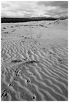 Caribou tracks and ripples in the Great Sand Dunes. Kobuk Valley National Park ( black and white)