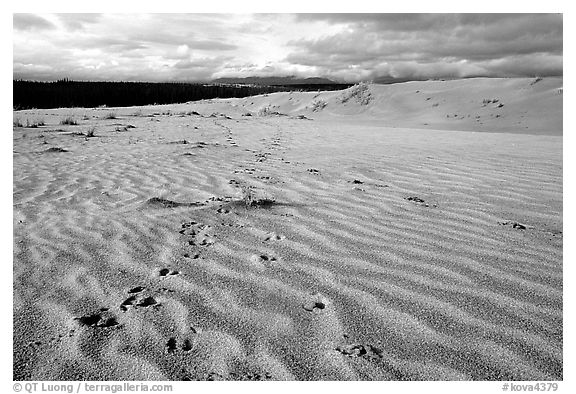 Caribou footprints and ripples in the Great Sand Dunes. Kobuk Valley National Park (black and white)