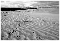 Caribou footprints and ripples in the Great Sand Dunes. Kobuk Valley National Park, Alaska, USA. (black and white)