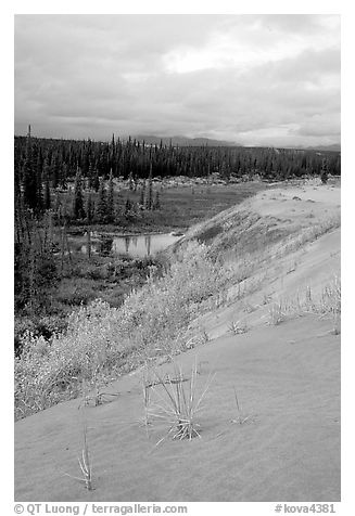 The edge of the Great Sand Dunes with the boreal taiga. Kobuk Valley National Park (black and white)