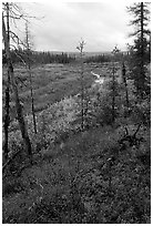 Autumn colors on Kavet Creek near the Great Sand Dunes. Kobuk Valley National Park, Alaska, USA. (black and white)