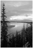Boreal trees and bend of the Kobuk River, evening. Kobuk Valley National Park, Alaska, USA. (black and white)