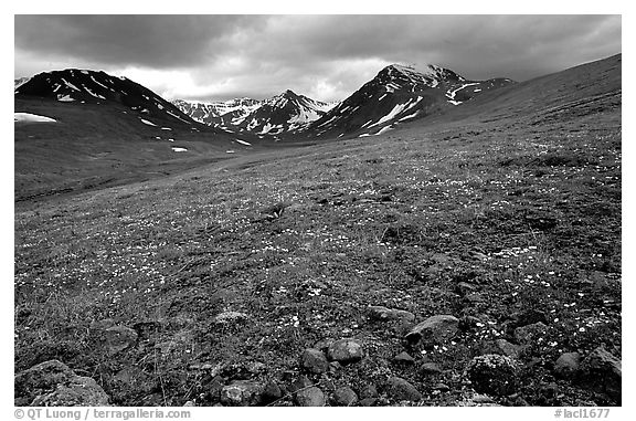 Green valley with alpine wildflowers and snow-clad peaks. Lake Clark National Park (black and white)