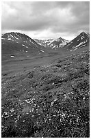 Valley with wildflowers, between Turquoise Lake and Twin Lakes. Lake Clark National Park, Alaska, USA. (black and white)
