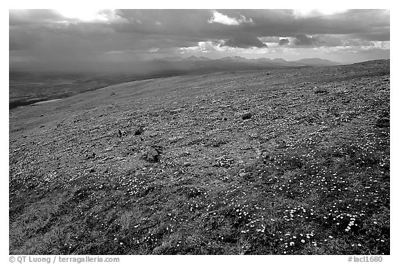 Tundra near Twin Lakes. Lake Clark National Park (black and white)