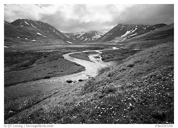 Valley with wildflowers, between Turquoise Lake and Twin Lakes. Lake Clark National Park (black and white)