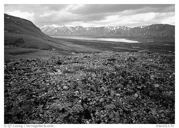 Tundra with blue forget-me-nots and Twin Lakes. Lake Clark National Park (black and white)