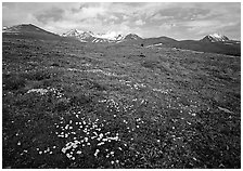 Green tundra slopes with alpine wildflowers and mountains. Lake Clark National Park ( black and white)