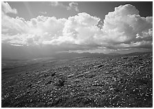 Tundra, wildflowers, and puffy white storm clouds. Lake Clark National Park ( black and white)