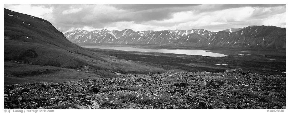 Tundra flowers with distant lake and mountains. Lake Clark National Park (black and white)
