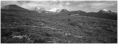 Wildflowers, tundra, and mountains. Lake Clark National Park (Panoramic black and white)