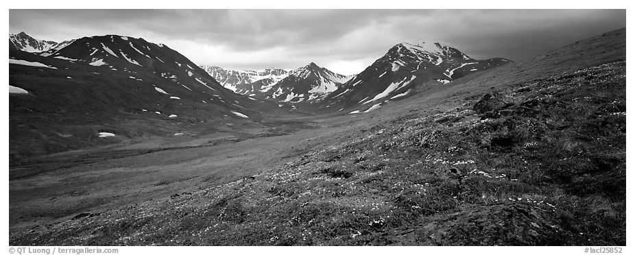 Summer mountain landscape with green tundra and wildflowers. Lake Clark National Park (black and white)