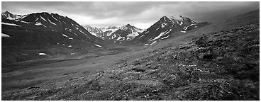 Summer mountain landscape with green tundra and wildflowers. Lake Clark National Park (Panoramic black and white)