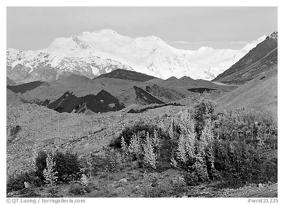 Trees in fall colors, moraines, and Mt Blackburn. Wrangell-St Elias National Park (black and white)