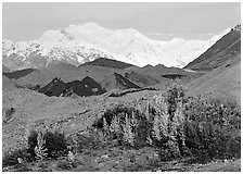 Trees in fall colors, moraines, and Mt Blackburn. Wrangell-St Elias National Park, Alaska, USA. (black and white)
