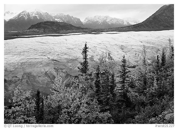 Trees, Root Glacier, and Wrangell Mountains. Wrangell-St Elias National Park (black and white)