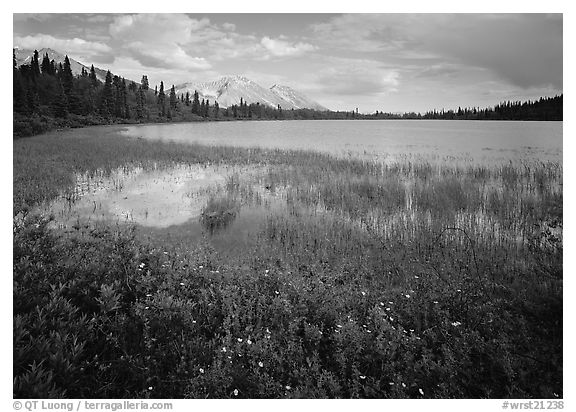 Wildflowers, reeds, and lake at the base of Mt Donoho. Wrangell-St Elias National Park (black and white)