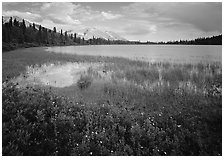 Wildflowers, reeds, and lake at the base of Mt Donoho. Wrangell-St Elias National Park ( black and white)