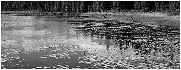 Pond with aquatic plants and reflections. Wrangell-St Elias National Park (Panoramic black and white)