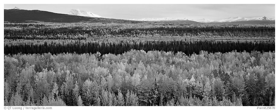 Valley with aspen trees in autumn. Wrangell-St Elias National Park (black and white)