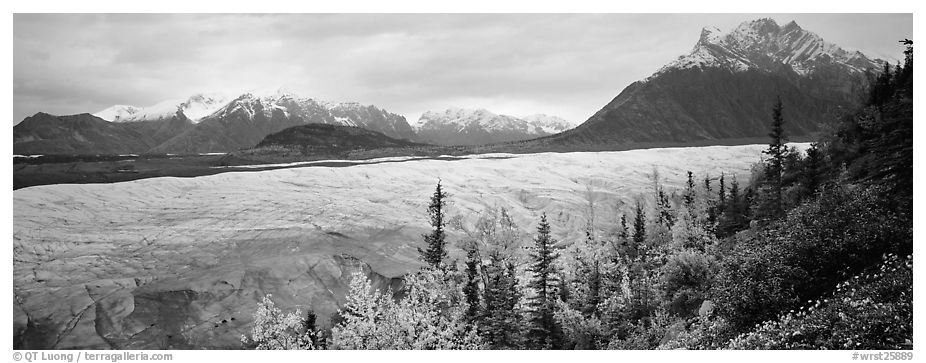 Mountain landscape with trees in fall color and glacier. Wrangell-St Elias National Park (black and white)
