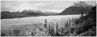 Mountain landscape with trees in fall color and glacier. Wrangell-St Elias National Park (Panoramic black and white)