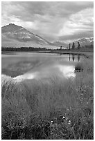 Flowers, grasses, lake, and mountains. Wrangell-St Elias National Park, Alaska, USA. (black and white)