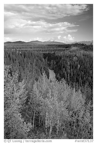 Aspen, Kuskulana canyon and bridge. Wrangell-St Elias National Park (black and white)