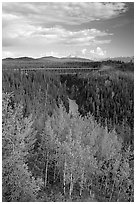 Aspen, Kuskulana canyon and bridge. Wrangell-St Elias National Park, Alaska, USA. (black and white)