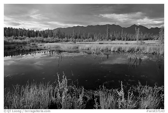 Pond and swamp with dark water. Wrangell-St Elias National Park (black and white)